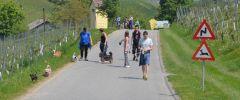 Wandertag-20140501-163