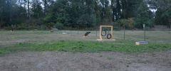 Welpenplatz-008